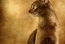 Cats / by Diane Buckler