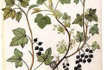 Botanical Prints & Natural Curiosities