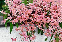 Beautiful plants / Plants, flowers, trees