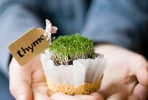 Cute Ideas / by The Herb Companion