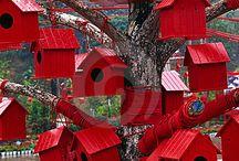 Ruddy Red