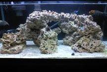 FOLR aquarium