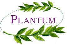 Plantum / Magazin online cu produse naturiste. plantum.ro