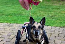 Help for Handicapped or Recovering Pets / Does your pet have a special need?