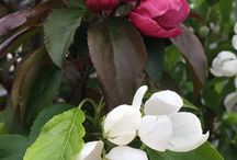 Our sales rep Jackie's top 3 plants for the Saskatoon area