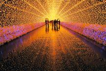 Lighting Festival / Lighting for Festival