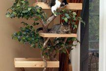 casă de pisici