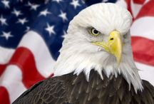 United States of America / by Melanie Pugh, DMD, PA