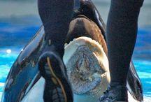 www.seaworldofhurt.com / animals at sea world that have something happen to them.....  :(