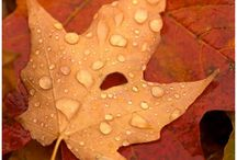 Autumn Love / The colors of Fall