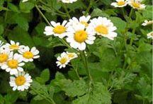 Bloemen en kruiden
