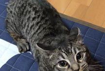 LOVE CATS / Katter, elsker katter <3