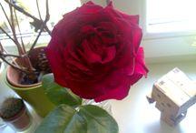 FLOWERS .-) / od přítele, k něčemu nebo jen tak .-) krásné