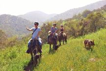 Horseback ride in the Andes near Santiago