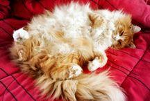 Gatos/puchitos / Gatos hermosas