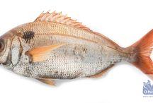 Pescados / Ofrecemos una amplia gama de pescados obtenidos en la costa Atlántica y en otras zonas pesqueras del mundo.