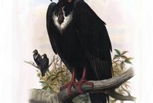 Birds of Asia from John Gould