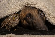 Unlikely friendships / Friendships aren't defined by boundaries. Friends come in all shapes, sizes, colors and species!