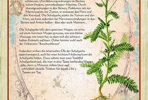 Heilkräuter / Heilpflanzen