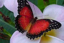 butterflies / Just beautyful butterflies