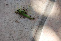microscosmos / Les insectes et autres du monde des petits
