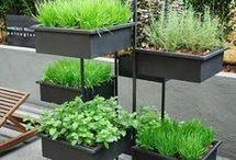 Jardinagem em apto