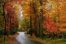 Autumnal radiance / by Rachel_Sunset