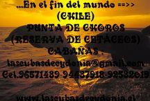cabañas las cubasdecydonia en chile  / @cubasdecydonia @carolinaandreac National Reserve Pinguino De Humboldt A solo 120 kilometros de la Serena se encuentra un paraiso donde te invitan a desconectarte y aprender a vivir!! PUNTA DE CHOROS (Chile) · lascubasdecydonia.cl