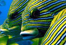 Zeeaquarium / De mooiste zeeaquaria, vissen, lagere dieren en koralen en alles wat met het zeeaquarium te maken heeft.