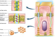 Physiology: Cells