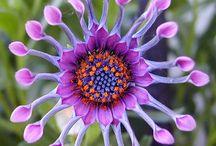 beaitiful flowers