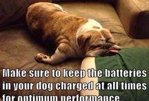 Love Bulldogs / All things Bulldog