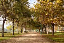 Otoño en Zaragoza / Las calles de Zaragoza cubiertas de hojas... què belleza, ¿no os parece?
