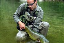Slovenia Fly Fishing / Fly Fishing in Slovenia