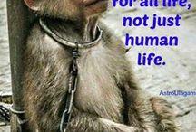 !!! how painful the truth :((( !!! / fucking humans WHY?!?!?!?! Nincs Isten, ha ezeket megengedi. :....(