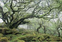 Oak Trees / by Jozef Crooks