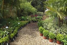 The Nursery, Urban Jungle / Urban Jungle is situated just outside Norwich in the UK. We are a garden centre / plant nursery selling unusual and exotic plants as well as some old favourites. We have display gardens, a koi pond and a self service cafe. We also hire plants and can supply you with a planting scheme if you are stuck for ideas.