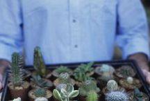gardening / by Saira Sayeed