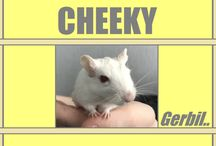 Rodents / All rodents including Gerbils, Hamsters & more!