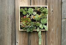 Gardens & plants