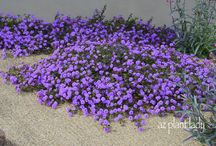Plants / Ground cover