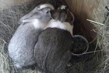 Minttu&Apila bunnies