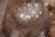 Otters are Super! / by Amanda White