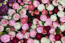 Warda Flower