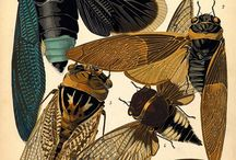 Insects / by Adam Kō Shin Tebbe