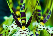 Bloemen Orchideeën