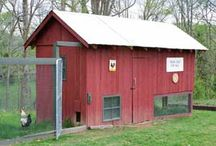 Farm Animal Dreams