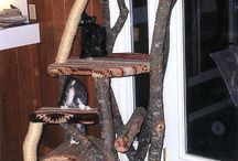 kitty trees / by Jodie Gillette