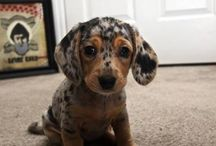 hau hau!!dog