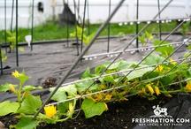 gardening adventures / by Fresh Nation